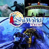 Tiket Masuk Seaworld Ancol - Premium Long Weekend
