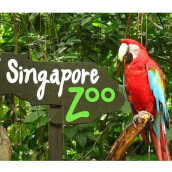 SINGAPORE ZOO with TRAM RIDE (Adult) (Value Rp. 315.000)