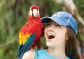 Bali Bird Park Entrance Ticket Child (2 - 12 Years) Value Rp 62.500