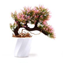 BLOOM & BLOSSOM Bonsai Topiari With Twirl Vase Pink