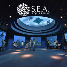 Tiket Masuk S.E.A Aquarium Singapore - Adult